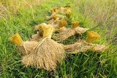 Der Stapel des Paddybündels nach Ernte Stockbild