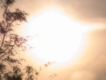 Der starke Sun hinter dem Bambus Stockfotos