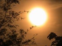 Der starke Sun hinter dem Bammboo Stockfoto
