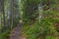 Der Staubweg im Wald mit grünen Bäumen auf dem Straßenrand Lizenzfreie Stockbilder