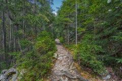 Der Staubweg im Wald mit grünen Bäumen auf dem Straßenrand Stockbilder
