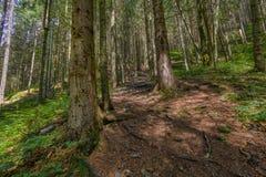 Der Staubweg im Wald mit grünen Bäumen auf dem Straßenrand Lizenzfreies Stockbild