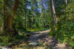 Der Staubweg im Wald mit grünen Bäumen auf dem Straßenrand Stockfoto