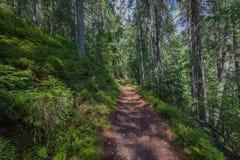 Der Staubweg im Wald mit grünen Bäumen auf dem Straßenrand Lizenzfreies Stockfoto