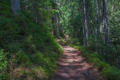 Der Staubweg im Wald mit grünen Bäumen auf dem Straßenrand Stockbild
