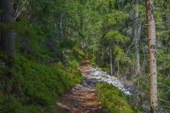 Der Staubweg im Wald mit grünen Bäumen auf dem Straßenrand Lizenzfreie Stockfotografie