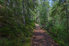 Der Staubweg im Wald mit grünen Bäumen auf dem Straßenrand Stockfotos