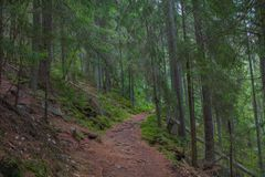 Der Staubweg im Wald mit grünen Bäumen auf dem Straßenrand Stockfotografie