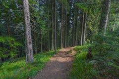 Der Staubweg im Wald mit grünen Bäumen auf dem Straßenrand Lizenzfreie Stockfotos