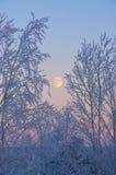 Der steigende Mond Lizenzfreies Stockbild