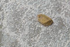Der Stein liegt auf der getrockneten Unterseite des Salzsees Stockfotos
