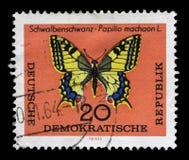 Der Stempel, der in DDR gedruckt wird, zeigt machaon L Schmetterling Schwalbenschwanz Papilio Stockbilder