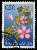Der Stempel, der in Jugoslawien gedruckt wird, zeigt Klasse Malva Stockfotos