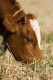 Der Stier auf einem Kreisläuf Lizenzfreies Stockbild
