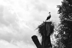 Der Storch ist in einem Nest Lizenzfreie Stockfotos