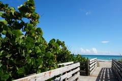 Der Strand-Gehweg lizenzfreie stockfotos