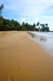 Der Strand in Sri Lanka Lizenzfreie Stockfotos