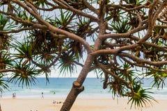 Der Strand und die Landschaft im Surfer-Paradies auf dem Gold Coast Lizenzfreie Stockfotografie