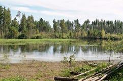 Der Streifen des Holzes auf einem toten See Stockbilder