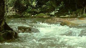 Der Strom, der in den Wald an Nakorn Nayok-Provinz in Thailand fließt stock footage