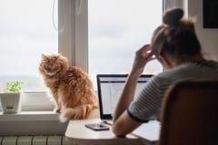 Der Studentinfreiberufler, der zu Hause an einer Aufgabe, die Katze arbeitet, ist Si stockfotos