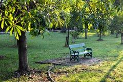 Der Stuhl und der Baum Stockfotografie