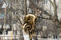 Der Stumpf eines gesägten Baums Stockfotografie