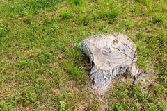 Der Stumpf eines großen und alten Baums Stockbild