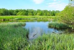 Der Sumpf Stockfotos