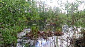 Der Sumpf Stockbild