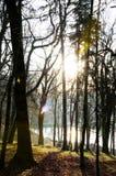 Der sunshining Wald lizenzfreie stockbilder