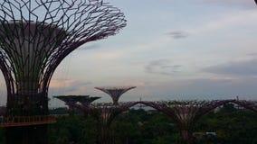 Der Super-Grove-Baum Stockfotos