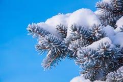 Der Tannenzweig umfasst durch den Schnee Stockbild