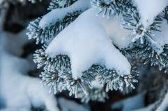 Der Tannenzweig umfasst durch den Schnee Lizenzfreie Stockbilder