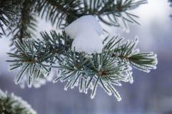 Der Tannenzweig umfasst durch den Schnee Lizenzfreie Stockfotos