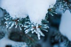 Der Tannenzweig umfasst durch den Schnee Lizenzfreies Stockfoto
