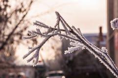 Der Tannenzweig umfasst durch den Schnee Stockfotos