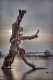 Der Tanzenbaum Stockbilder