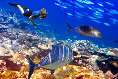 Der Taucher über Korallen und tropischen Fischen. Unterwasserlandschaft an einem sonnigen Tag lizenzfreies stockbild