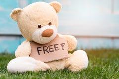 Der Teddybär, der eine Pappe mit den Informationen hält - geben Sie frei! Stockfotografie