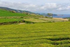 Der Teebauernhof auf Insel Sao Miguel in Azoren stockfotos