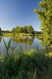 Der Teich Stockbild