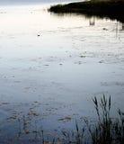 Der Teich an der Dämmerung Lizenzfreie Stockfotografie