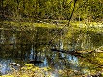 Der Teich im Holz Stockfoto