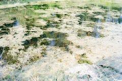 der Teich ist klein aber viel Fisch stockbilder
