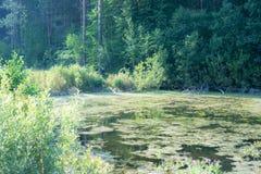 der Teich ist klein aber viel Fisch stockfoto