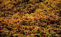 Der Teppich von Blumen Stockfotografie