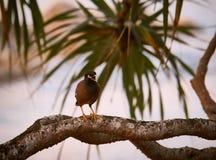 Der thailändische Vogel Stockbild