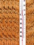 Der Thermometer auf einer Wand von einem Baum Lizenzfreies Stockfoto