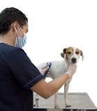 Der Tierarzt cheaking den Hund Lizenzfreie Stockfotos